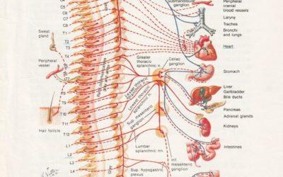 手汗知識|胸交感神經切除手術,會不會造成其他機能障礙?